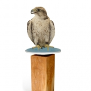 eagle superimposed on belatrova birdbath