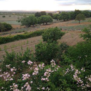 dry landscape of Mallorca